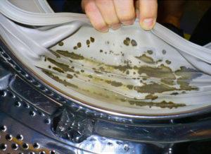 Грибок и плесень в стиральной машине