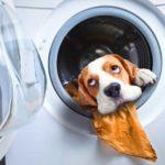 Почему гудит стиральная машина во время стирки: советы по ремонту