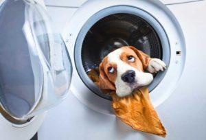 """Посторонний """"предмет"""" в стиральной машине"""