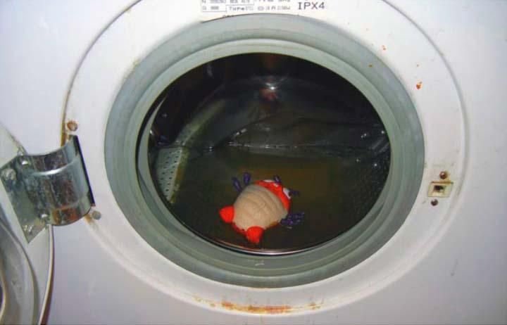Застой воды в стиральной машине